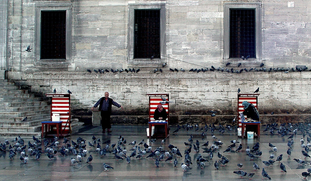 photo of pigeons in Istanbul by Tim O'Brien